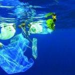 Marseille: opération zéro déchet plastique en mer